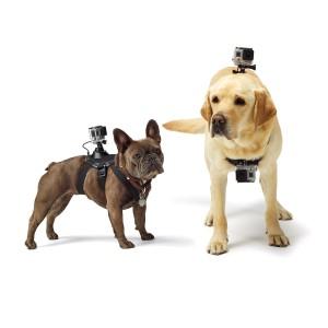 GoPro Hundegeschirr